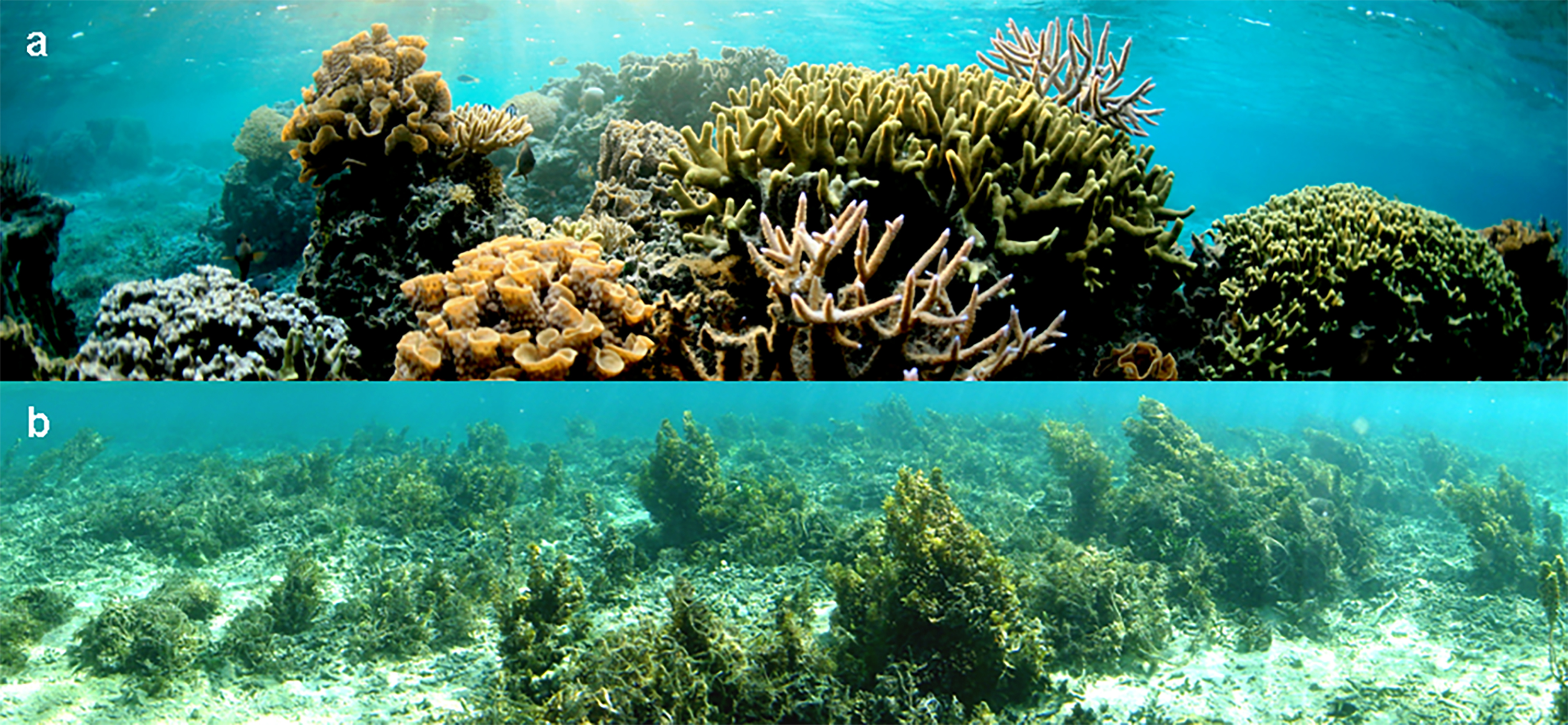 Regulated vs. unprotected Pacific reefs photo
