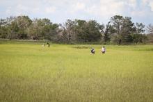 Research on the salt marsh of Sapelo Island, Georgia (Courtesy of UGA)