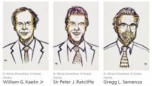 Winners of 2019 Nobel Prize in Physiology or Medicine (Credit: Nobel Media)