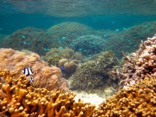 Marine protected area