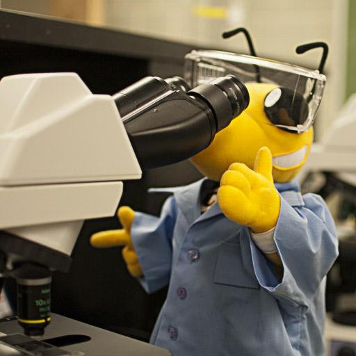 Undergraduate research & internships